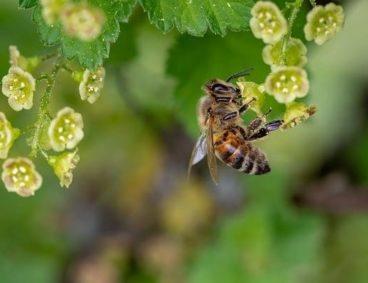 Biodiversité, Journée mondiale de l'environnement